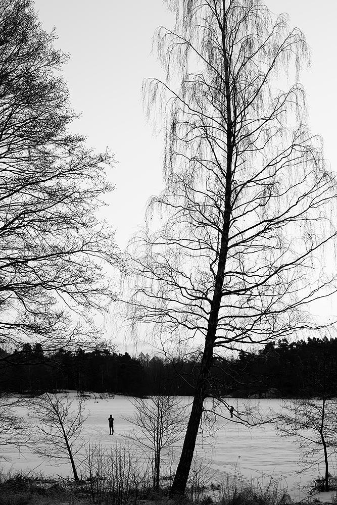träd3