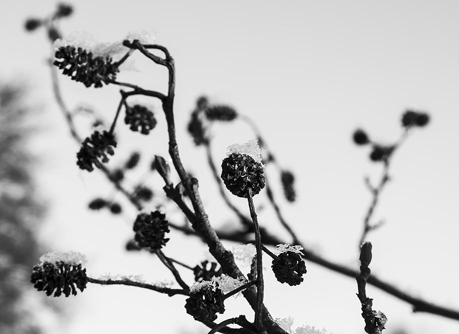 träd5