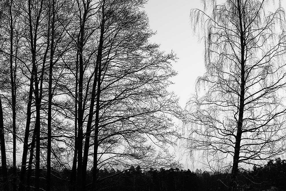 träd6